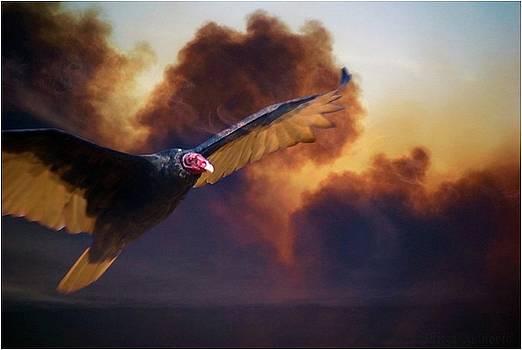 Firebird 2 by Mirza Ajanovic