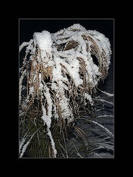 First snow by Marija Djedovic
