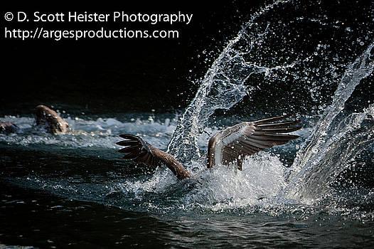 Fishing by Scott Heister