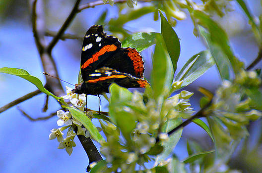 Five Rivers Butterfly by Wendy McLaughlin