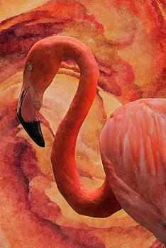 Flamingo by Jack Zulli