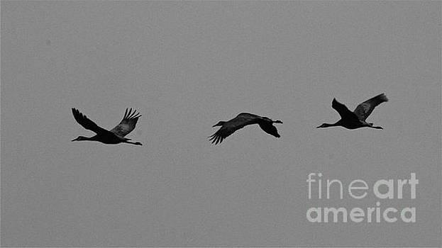 Flight by Rick  Monyahan