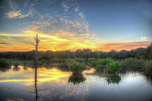 Florida Wetlands Sunset by Allan Einhorn