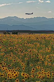 Flower Landing by Richard Keer