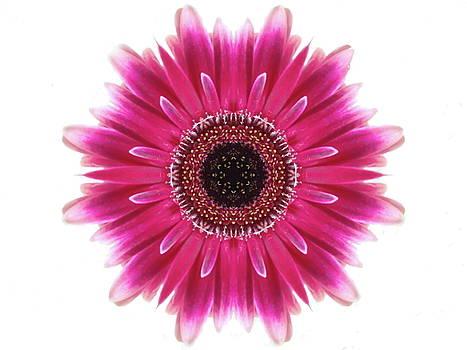 Andrea Kollo - Flower Mandala