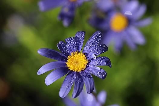 Flower by Martha Boyle