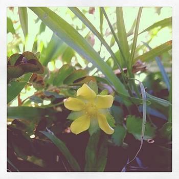 #flower #nature #like #follow #followme by Shyann Lyssyj