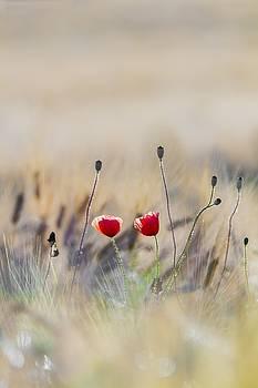 Flower by Vincent Marguerit