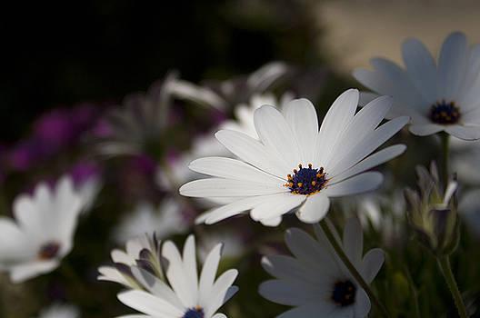 Flowers by Mickael PLICHARD