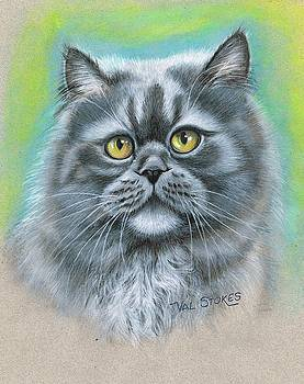Fluffy Persian by Val Stokes
