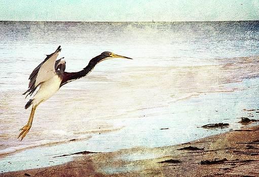Fly In by Eagle Finegan