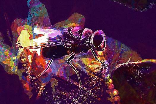 Fly Nature Insects Macro  by PixBreak Art