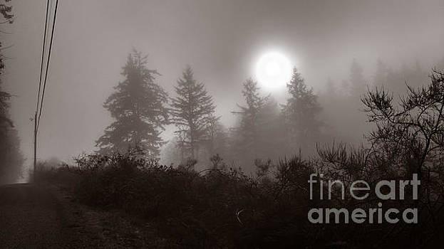 Fog by Mark Alan Perry