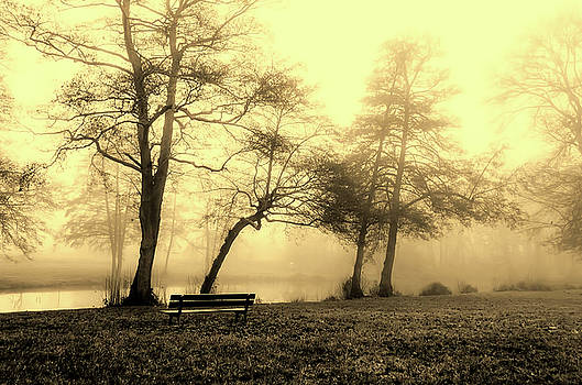 Foggy December Morning In France by Pixabay