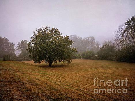 Foggy Morning by David Lane