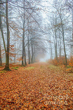 Patricia Hofmeester - Footpath in fall forest
