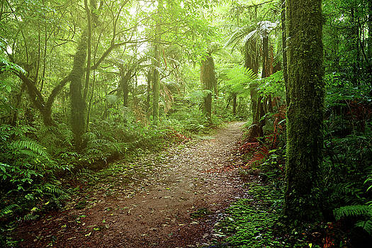 Forest walking trail 1 by Les Cunliffe