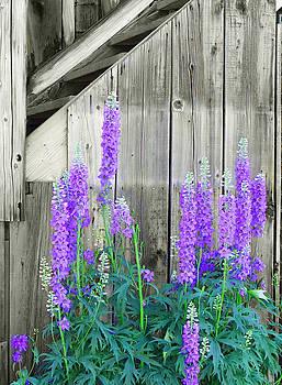 Framed Flowers by Margaret  Slaugh