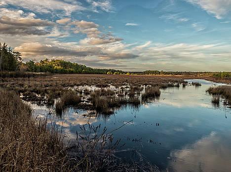Louis Dallara - Franklin Parker Preserve Landscape