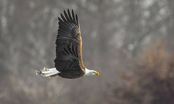 Freedom  by Kelly Marquardt