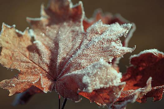 Jenny Rainbow - Frosty Maple Leaf