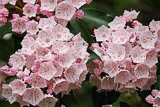 Full Bloom by Randy Bodkins