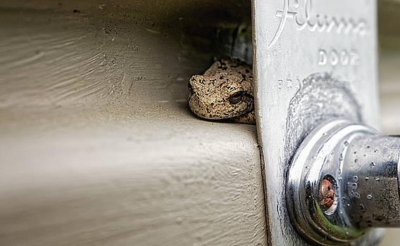 Garage Door Tree Frog by Lars Lentz
