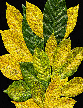 Gardenia Leaves by Charles Carlos Odom