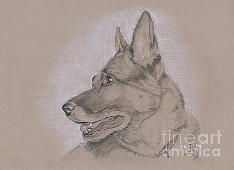 German Shepherd - Kyra by Steve Hamlin