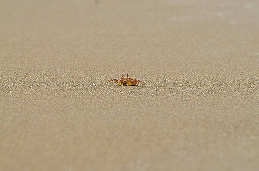 Ghost Crab on the Beach by Richard Espenant