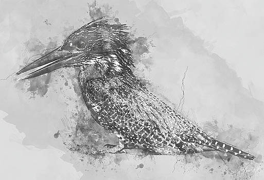Giant Kingfisher by Petrus Bester