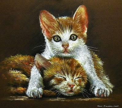 Ginger Cats by Tony Calleja