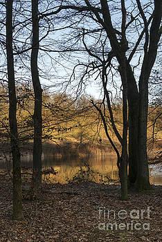 Compuinfoto  - golden evening sunlight in nature