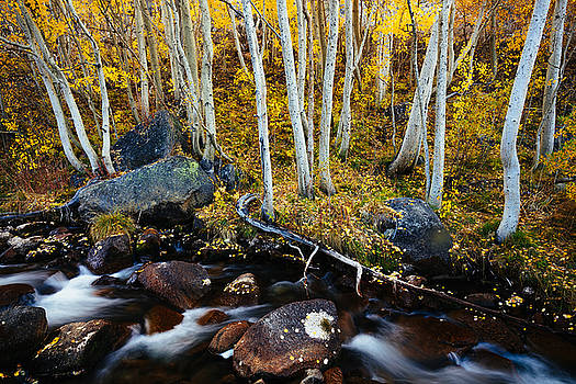 Golden Respite by Justin Lowery