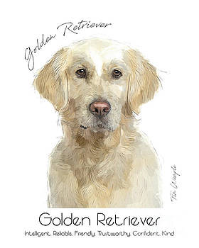 Golden Retriever Poster by Tim Wemple