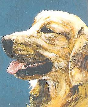 Golden Retriever-Sandy by Steve Greco