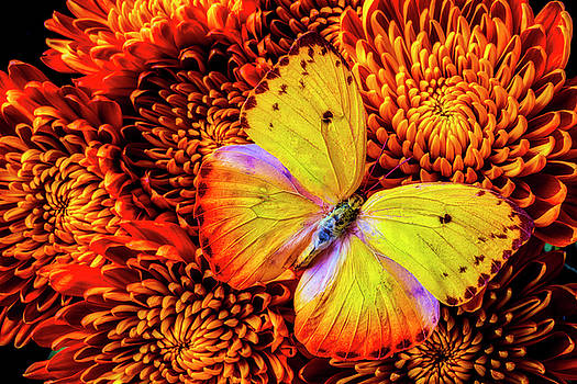 Golden Yellow Butterfly by Garry Gay