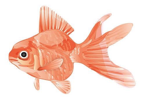 Goldfish by Moto-hal
