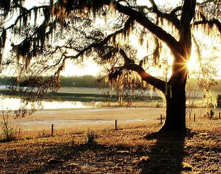 Good Morning Mossy Oak by Janis Lee Colon
