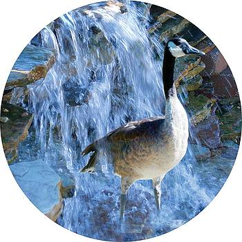 Colette Merrill - goose in waterfall