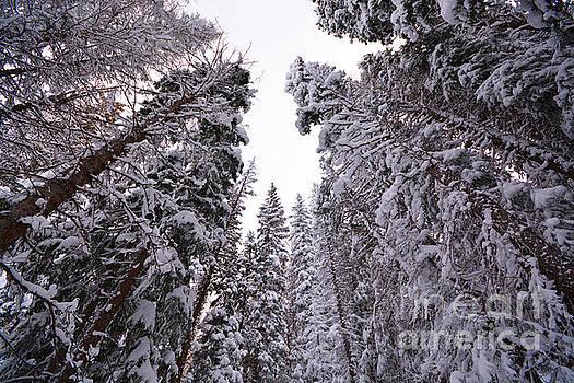 Kate Avery - Grand Mesa Winter