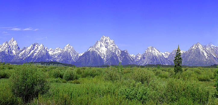 Grand Tetons Panorama by Mary Gaines