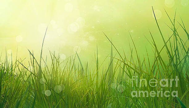 Mythja Photography - Grass in spring
