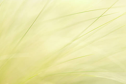 Grassy Dreamy by Debi Bishop
