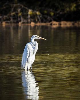 Great Egret-IMG_037918 by Rosemary Woods-Desert Rose Images