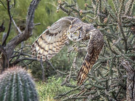 Tam Ryan - Great Horned Owl