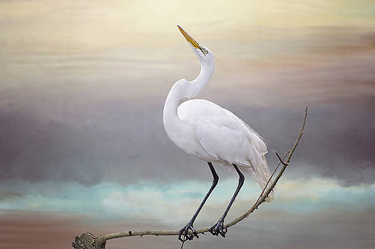 Great White Egret  by Bonnie Barry
