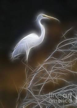 Great white egret by Sergey Korotkov