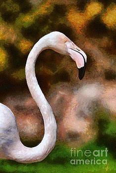 Greater Flamingo by George Atsametakis