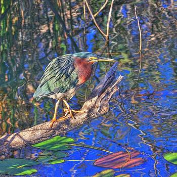 Green Heron on Red Alert by John Rowe